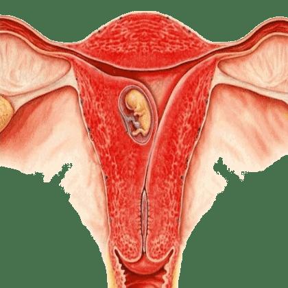 Wie sehen einnistungsblutungen aus